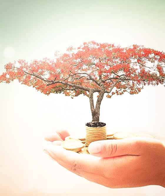 Un arbre qui pousse sur des euros dans le creux d'une main - Goodwill Management