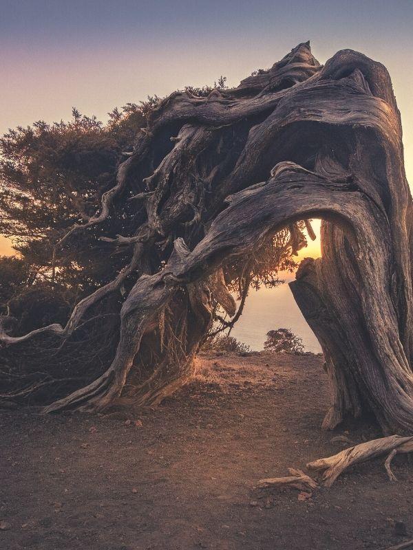 Arbre déformé par le vent symbole de résilience - Goodwill Management